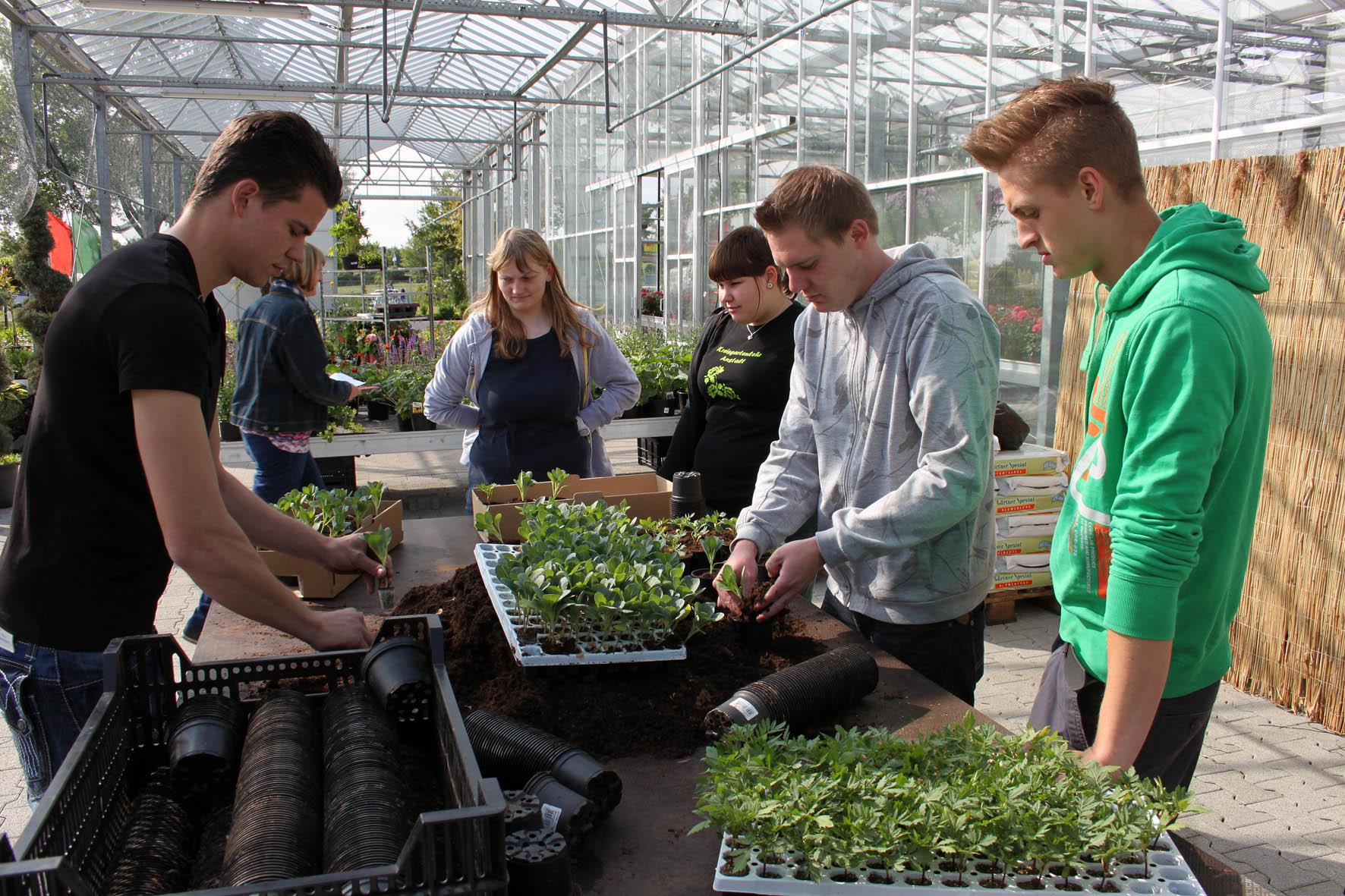 Kulturarbeiten – Handtopfen von jungen Pflanzen