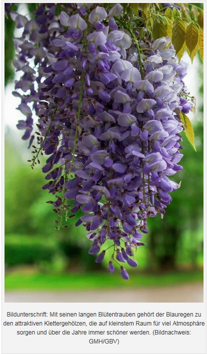 Viele Blüten GMH.jpg
